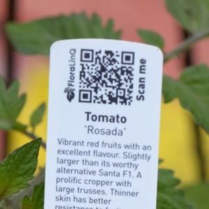 qr-code-tomato