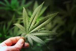 Medical Marijuana, CBD & Hemp Oil Printing - Cosmetic Labels